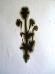 la révolte des fleurs